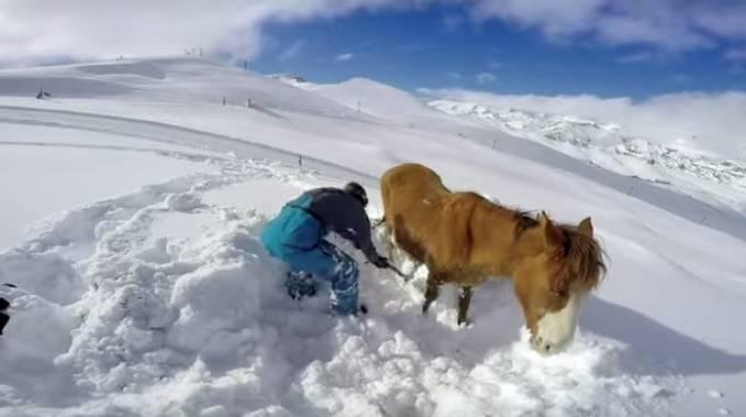 Rafael e il cavallo imprigionato nella neve