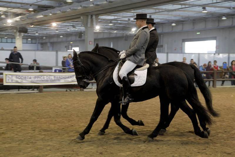 Cavalli delle Murge al padiglione AIA, foto EnneVI