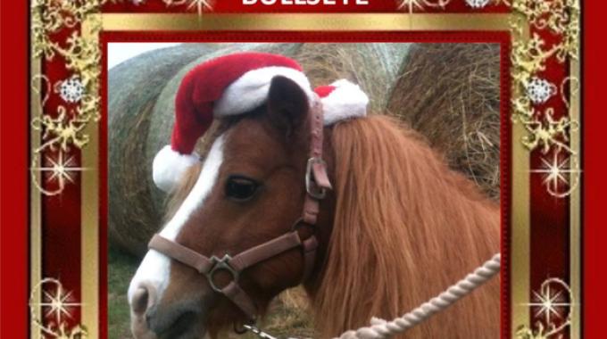 Immagini Di Natale Con Cavalli.Texas Un Video Di Auguri Tutto Da Copiare