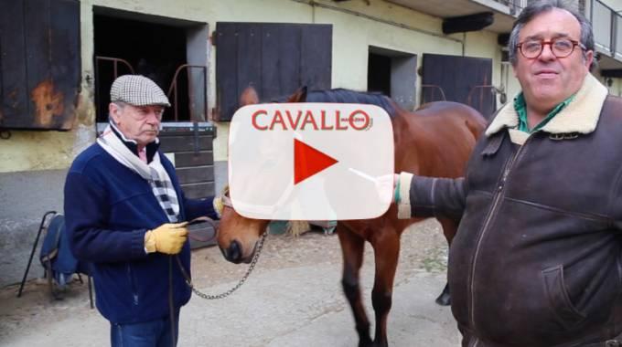 Come misurare la febbre del cavallo