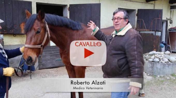Cavallo Vet Magazine, come valutare il dimagrimento del cavallo