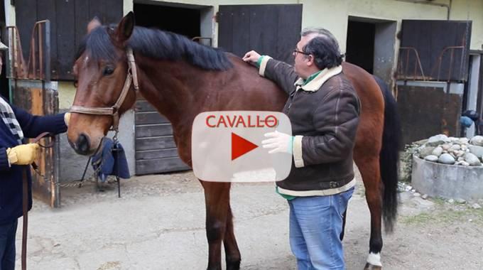 Come controllare la schiena del cavallo, Cavallo Vet Magazine