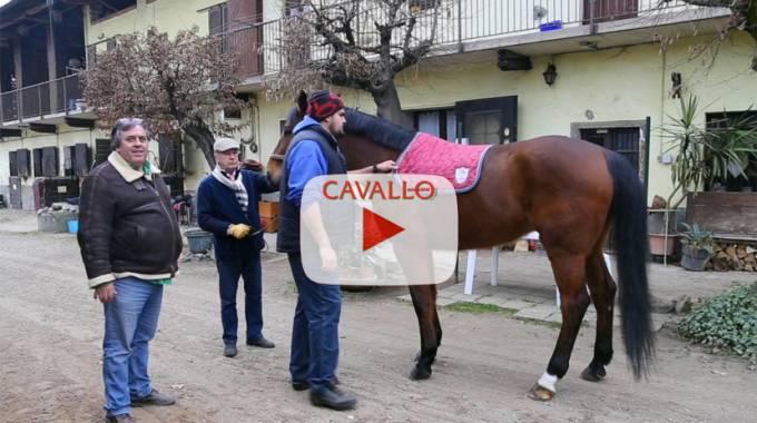 Video Tutorial: Come sellare il cavallo ©Cavallo Magazine