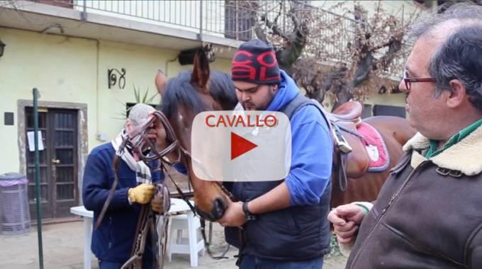 Come mettere la testiera al cavallo - ©Cavallo Magazine Tutorial