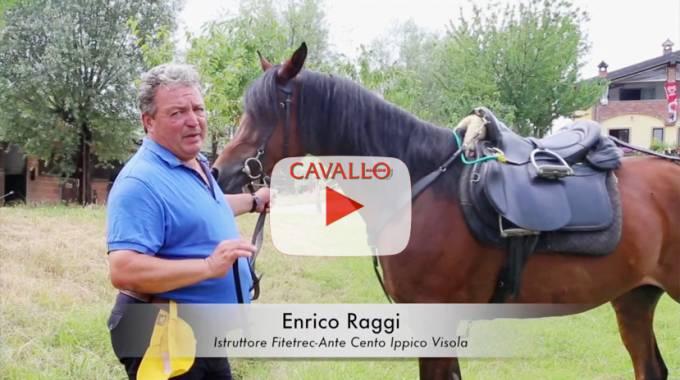 Cavallo Trek Magazine: affardellare al meglio il cavallo - © Cavallo Magazine