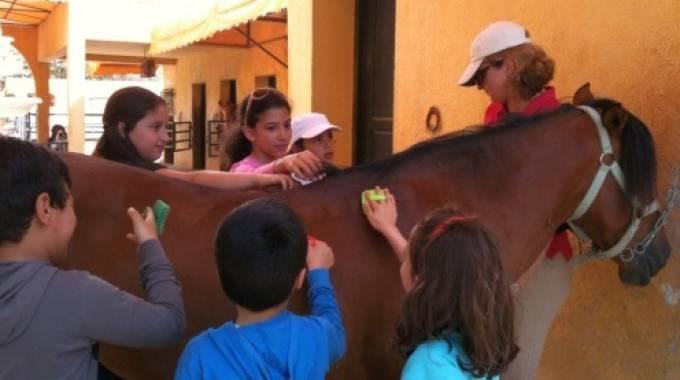 Un pony di Mogod in mezzo ai bimbi