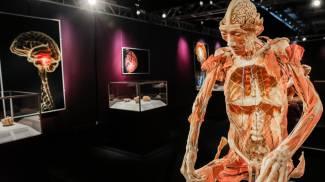 Un corpo esposto a Real Bodies