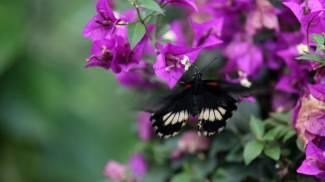 Farfalla in una foto L.Gallitto
