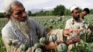 L'Afghanistan prepara il Narco-Stato che inonderà il mondo di eroina