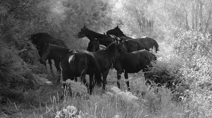 Sanfratellani nel parco dell'Etna, foto Salvo Cannizzaro/WikiCommons