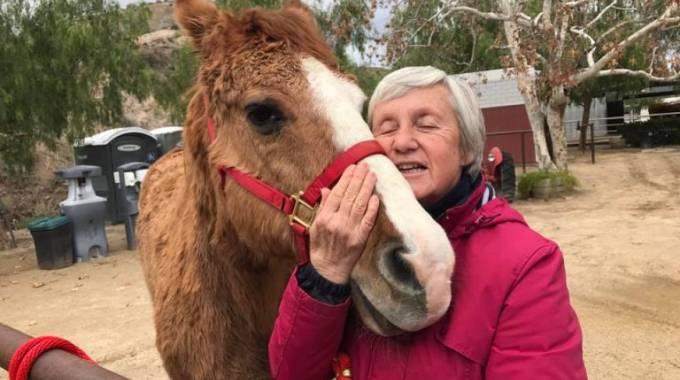 Uno degli ospiti di The Gentle Barn, da Facebook