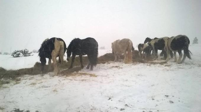 I cavalli di Michela Paris sotto la bufera, photo Michela Paris