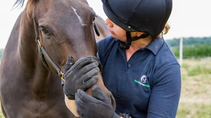 Proprietari responsabili, il sogno di ogni cavallo