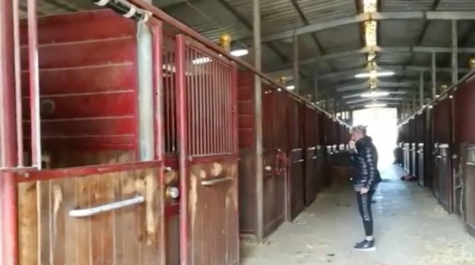 Sequestrati i cavalli Unicka e Vampire Dany gli eredi di Varenne © La Nazione