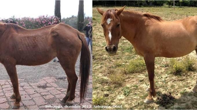 Selvaggia prima e dopo, photo IHP