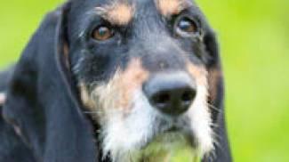 Kiwi, uno dei cani ospiti del canile di Ferrara