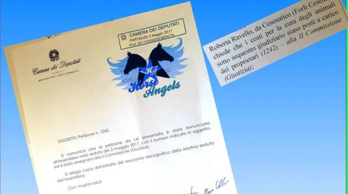 Petizione Horse Angels