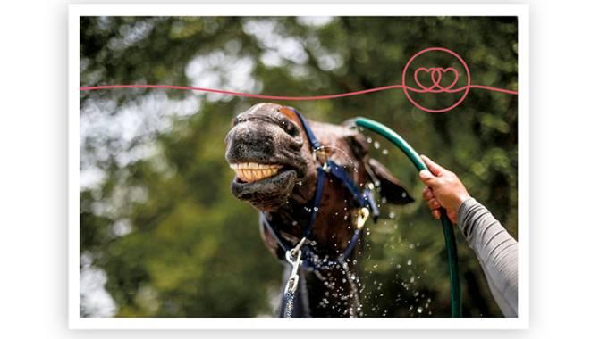 Che afa fa...e il cavallo? 5 trucchi + 1 per difenderlo dal caldo ©FEI