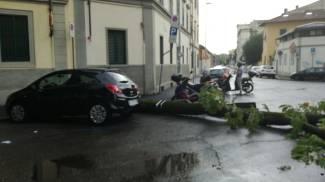 Caduto albero in Viale Corsica (foto Teresa Mainolfi)