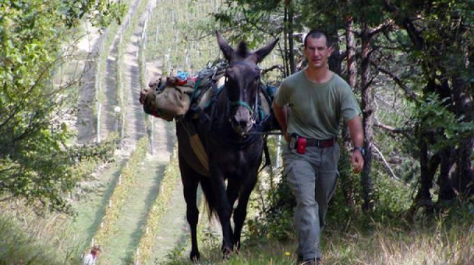 Un mulo in azione, da TargatoCn