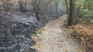 Il bosco bruciato al Campo dei Fiori