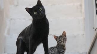 Gatti in una foto L.Gallitto