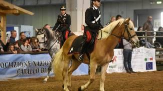 Cavalli italiani a Fieracavalli Verona con l'Associazione Italiana Allevatori