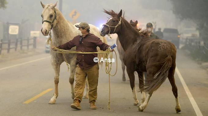 Incendio in California: una tragedia anche per i cavalli ©SE Poligrafici/ANSA