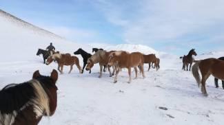 I cavalli del Sibillini Ranch sono scesi a Norcia