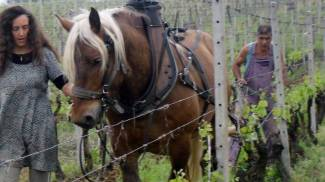 Buone notizie: i cavalli da lavoro sono contagiosi