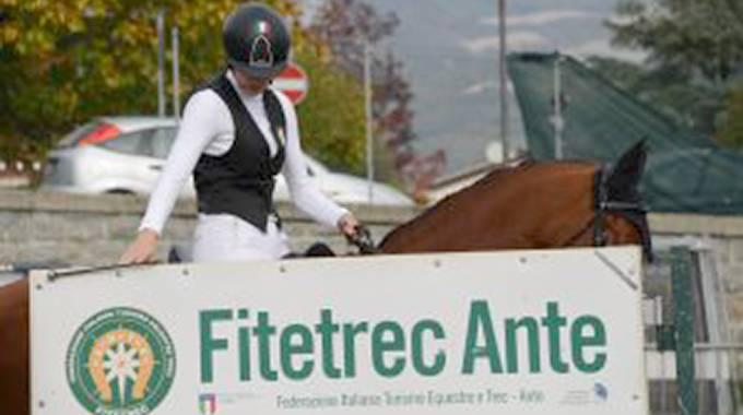 Mipaaf aumenta i montepremi dei cavalli italiani per la Monta da Lavoro Fitetrec Ante ©FTA