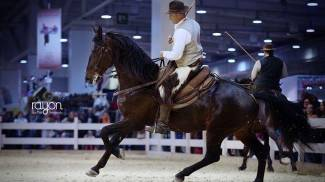 Germania: stalloni Maremmani protagonisti ad Hannover