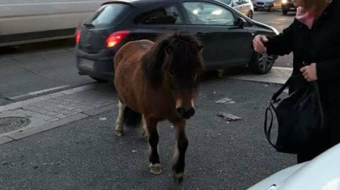 Il pony di Castelverde, dal gruppo Facebook Roma Est