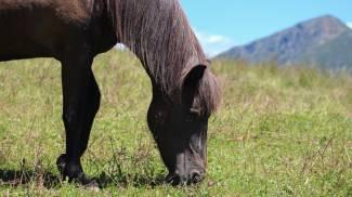 Cavallo in una foto di repertorio (L.Gallitto)