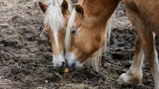 Cavalli in una foto di repertorio (L.Gallitto)