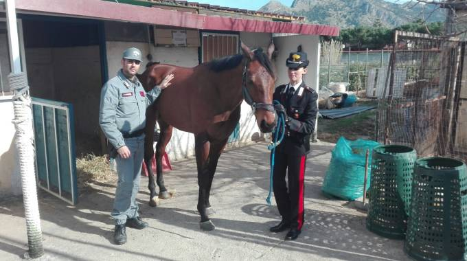 Il cavallo dello schianto, foto Arma dei Carabinieri