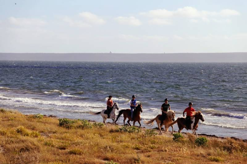 Horse Country Resort: trek in spiaggia e in pineta in compagnia di guide esperte ©HCR