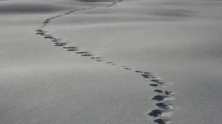 Impronte sulla neve (Foto L.Gallitto)