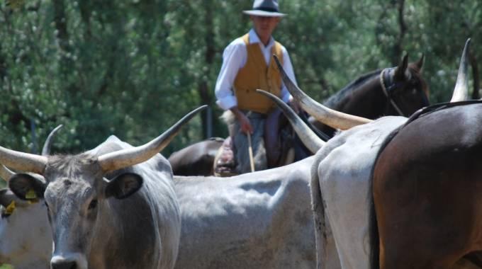 Butteri, cavalli e vacche: Maremma, foto di Maria Cristina Magri