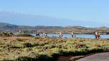 Ad Arborea è arrivato il Sardegna Endurance Festival