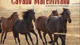 1° Raduno del Cavallo Maremmano, a Valentano