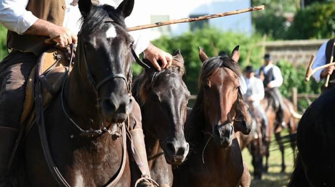 Butteri e cavalli, foto di Annalisa Parisi