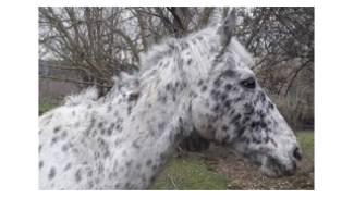 Macellazione cavalli in Italia, lo studio di Italian Horse Protection