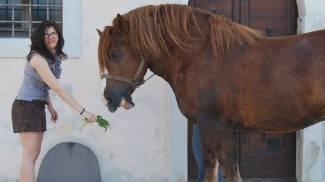 Padova: per i cavalli Caitpr torna il Meeting Duca degli Abruzzi