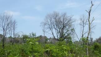 Alcuni degli alberi seccati nel Livornese