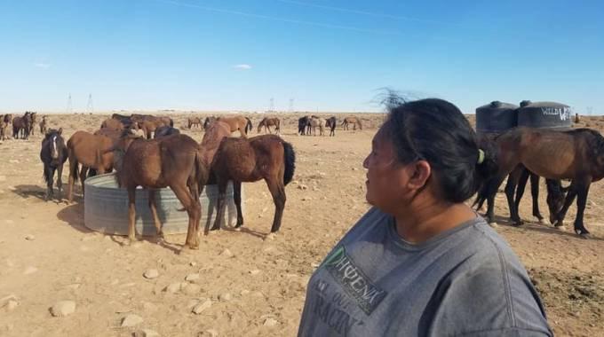 Glenda e i cavalli all'abbeverata, foto Sarah J. Woodie