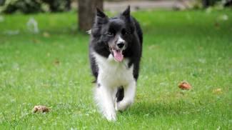 Pet Therapy, il cane Juno