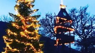 La casa sull'albero di Francesca Maffei illuminata