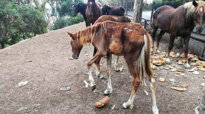 I puledri di Corviale, foto Horse Angels