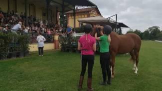 Per capire il tuo cavallo gira lo specchio verso di te